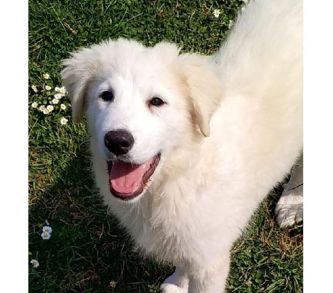 Gladiolo, splendido cucciolo di 90 giorni cerca casa
