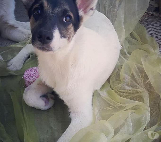 Pimpa,dolcissima cucciolona piena di vita e super coccolona