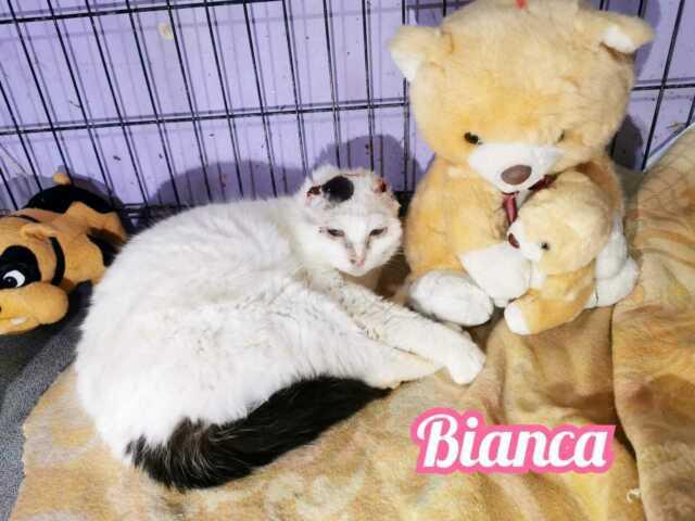 Bianca adozione del cuore