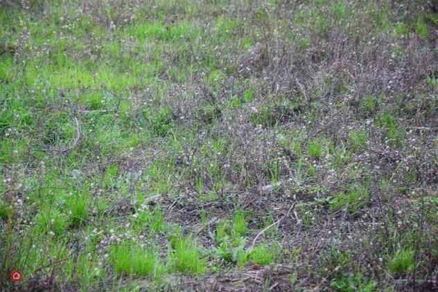 Terreno agricolo di 1650mq in via paronese a prato