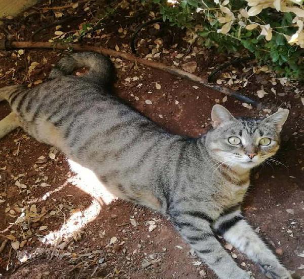Sandra, dolcissima gattina di 1 anno