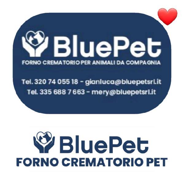 Blue pet srl forno crematorio animali a pisa