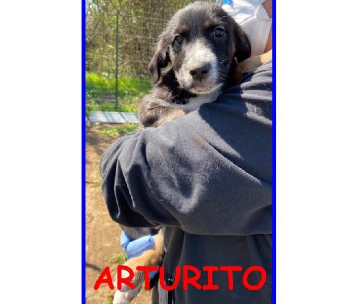 Arturito pacioccoso cucciolo 3 mesi sogna una mamma umana ch
