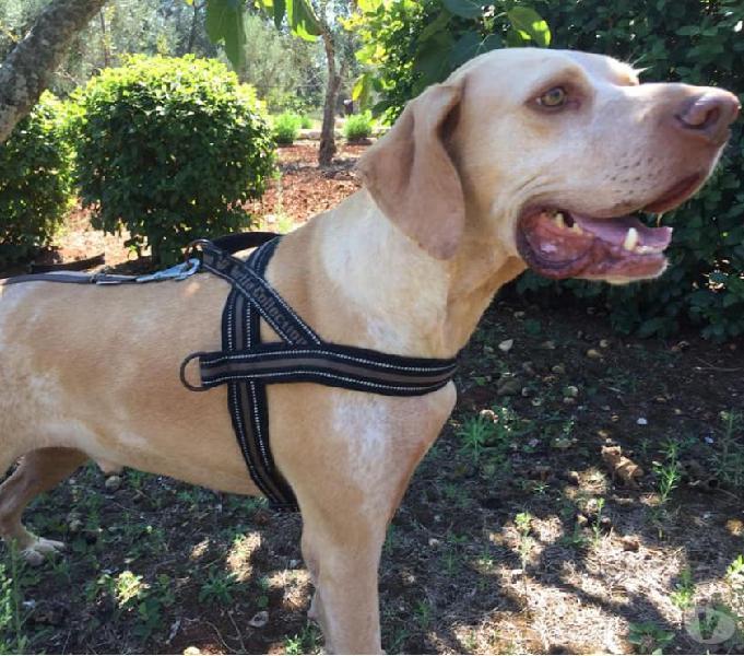 Casper,meraviglioso cane in cerca di casa