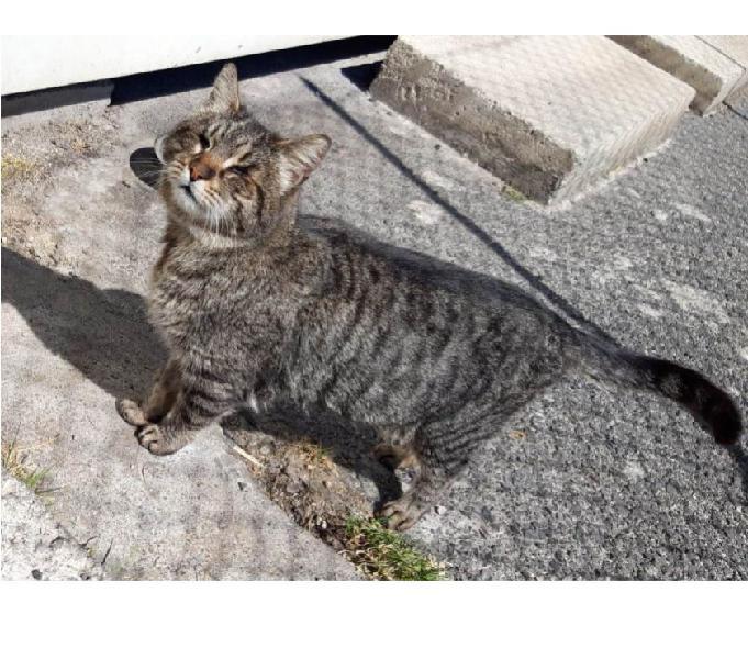 Chicca, dolce e buonissima gattina cieca in cerca di amore!