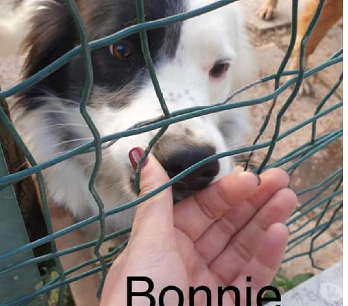 Bonnie e clyde in adozione