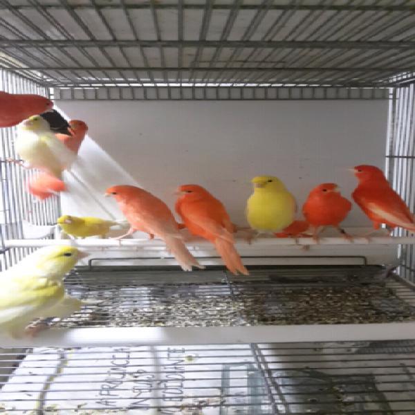 Uccelli vari