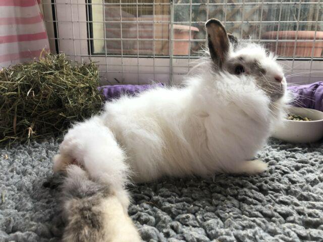 Adozione del cuore-zoppina coniglietta
