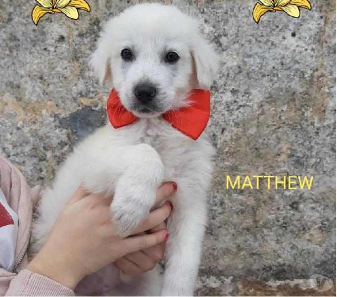 Matthew solo 2 mesi