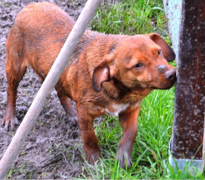 Esse, giovane cagnolino di taglia piccola cerca casa!