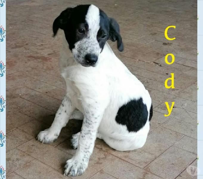 Cody cerca casa