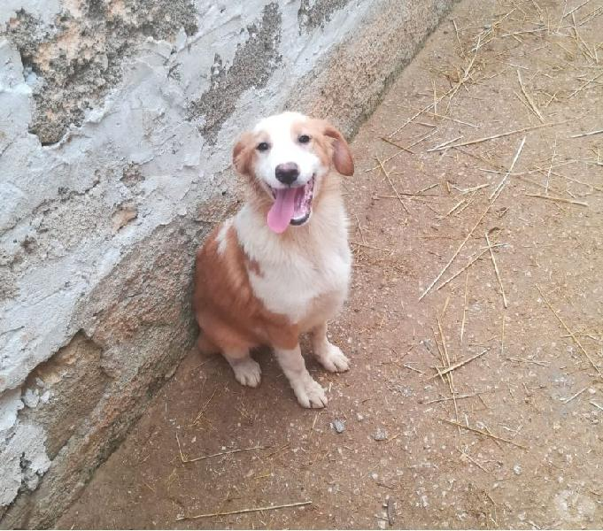 Cuccioli vogliono casa urgentemente