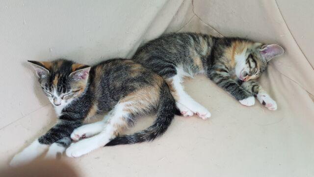 Gattine 2 mesi