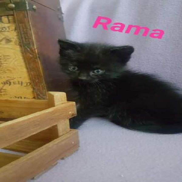Rama in adozione