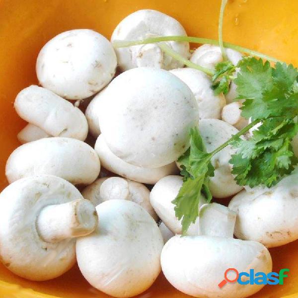 Egrow 100 pz / borsa semi di funghi bianchi nuovi semi di ortaggi commestibili e sano semi di piante bonsai