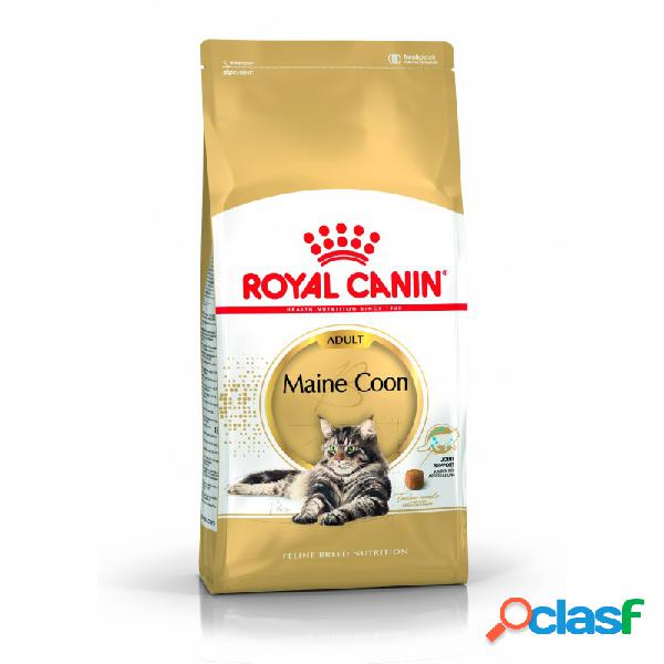 Royal canin razze - royal canin maine coon adult crocchette per gatti sacco da 2 kg