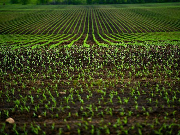 Terreno commerciale via enzo ferrari, san benigno canavese