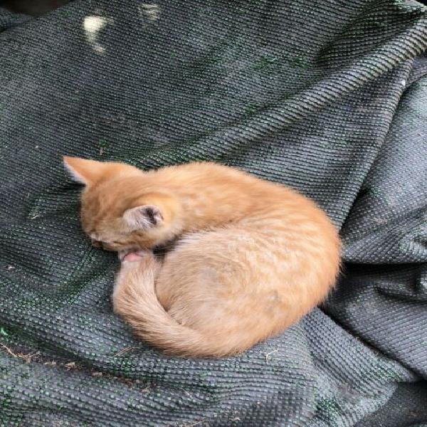 Gattini 3 mesi