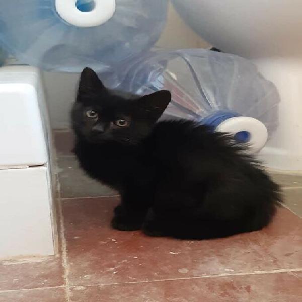 Semola, gatto 2 mesi e mezzo