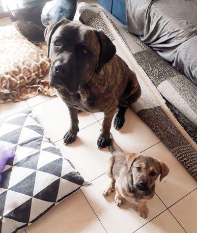Dog sitter passeggiate o a casa