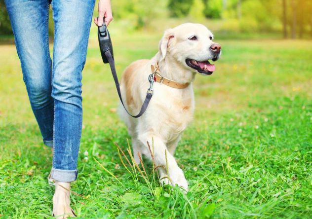 Dog sitter/cat sitter socia enpa esperienza pluriennale