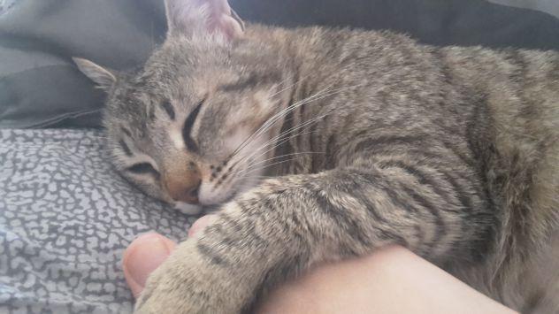 Cat sitter appio latino