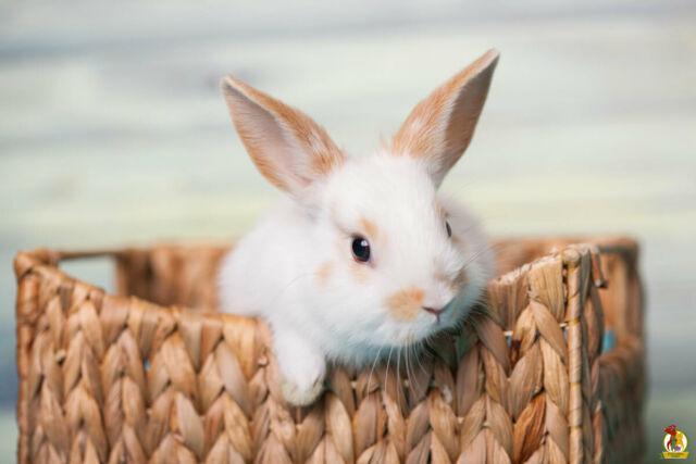Pensione per piccoli animali (conigli/cavie/ porcellini