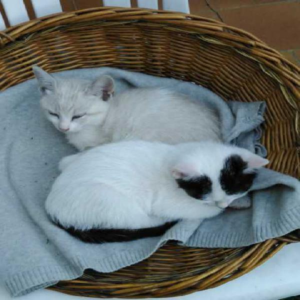 Gattini a coppie