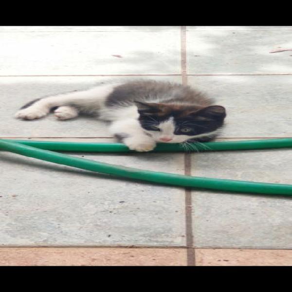 Regalo 2 gattini