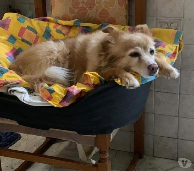 Benny, dolcissima cagnolina piena di vita e amore e solare