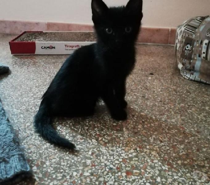 4 dolcissimi gattini pieni di vita e amore
