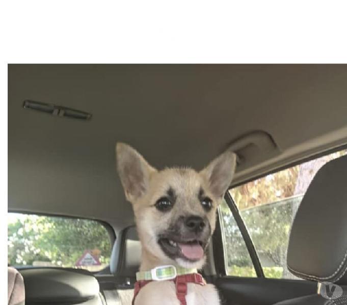 Kira cucciola taglia medio piccola