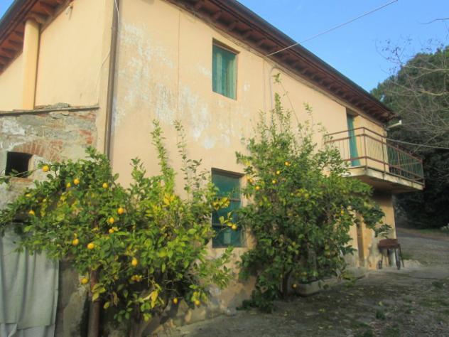 Azienda agricola in vendita a crespina - crespina lorenzana