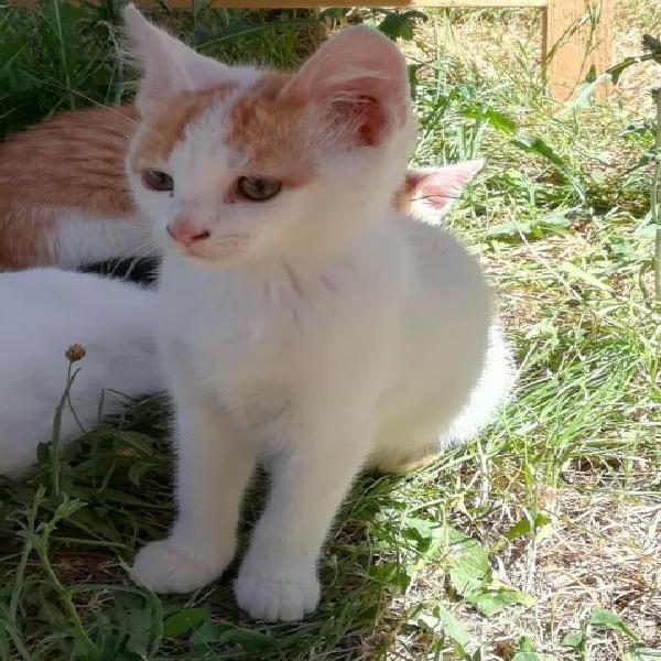 Regalo due gattini adorabili