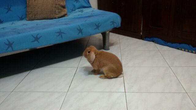 Pensione per piccoli animali