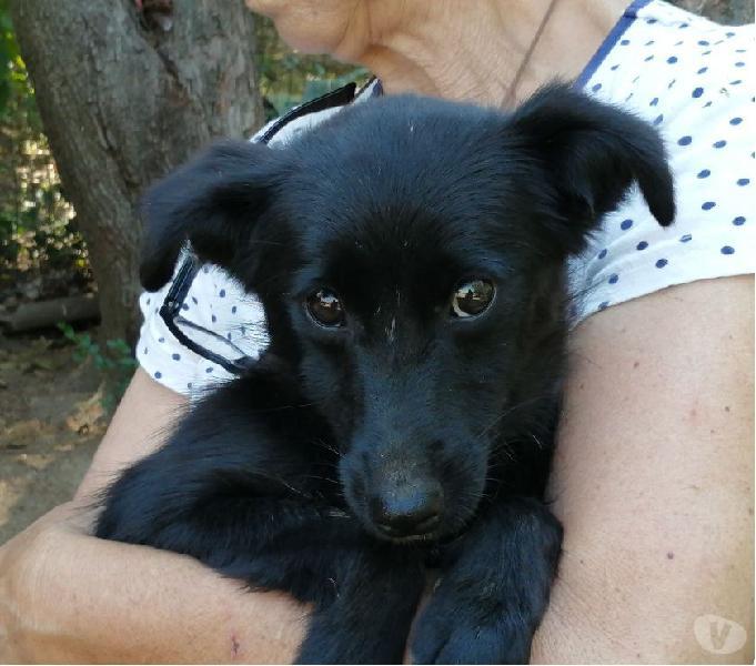 Nerina bellissima cagnolina taglia piccola cerca casa!