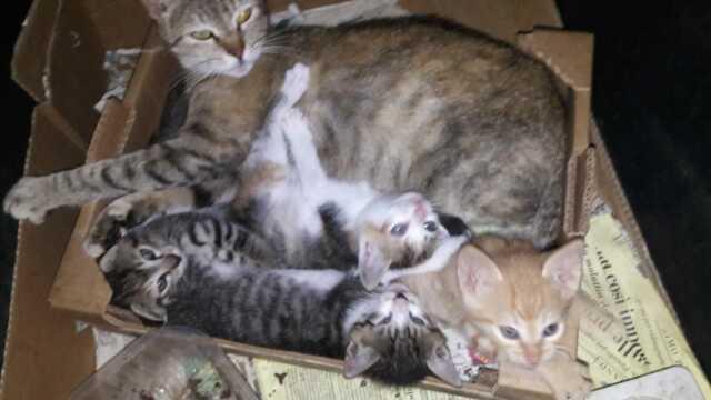 Regalo gattini