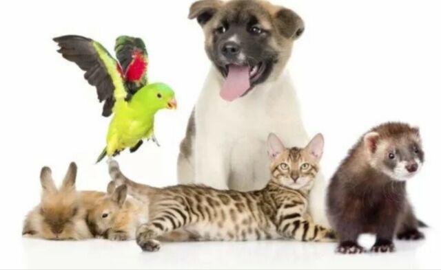 Pensione casalinga per piccoli animali