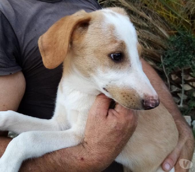 Macchietta cerca casa cucciolo di 4 mesi