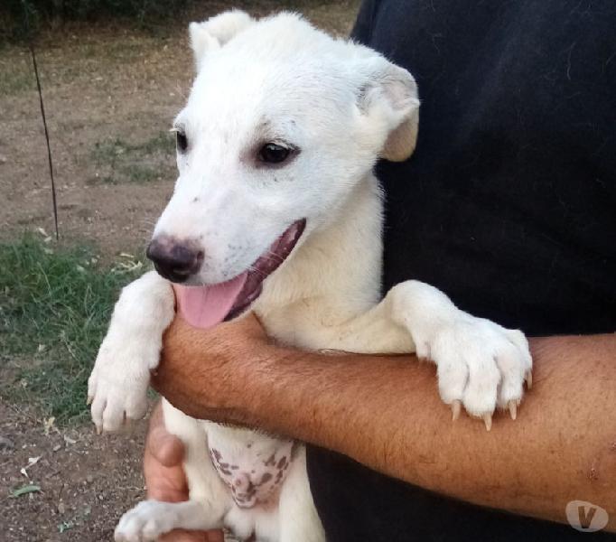 Pippo cerca casa cucciolo di 4 mesi