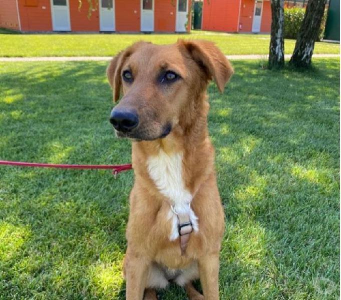 Bhia: simpatica cagnolina da adottare subito