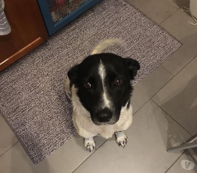 Regalo cane femmina, 3 anni, sterilizzata