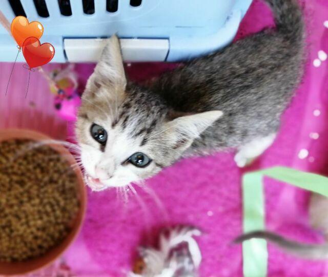 Regalo gattino maschio dolce dolce