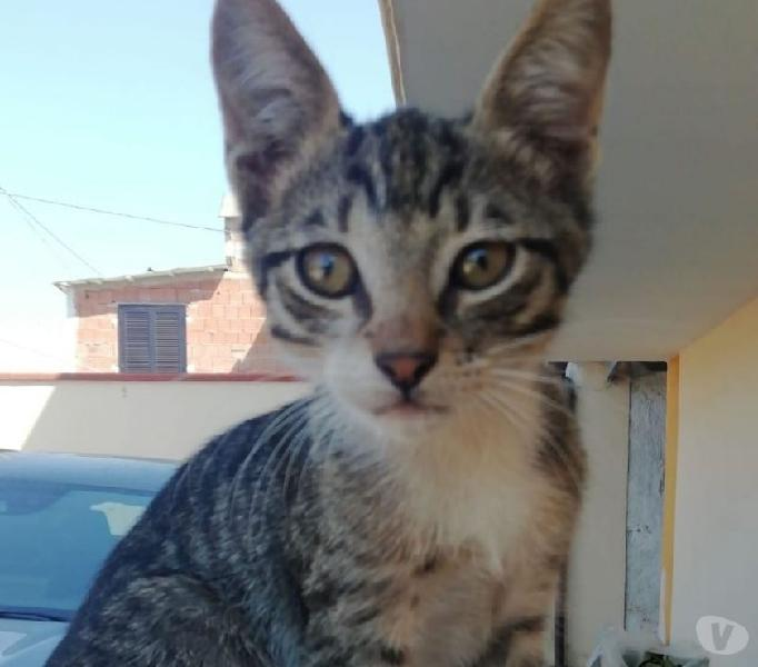 Bil: gattino 3 mesi cerca famiglia