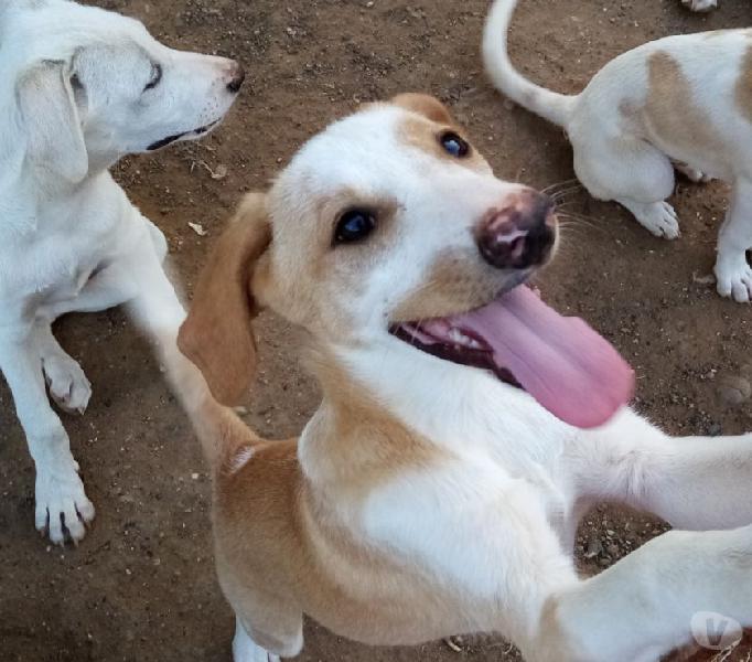 Una casa per terry cucciolo di 4 mesi taglia medio contenuta
