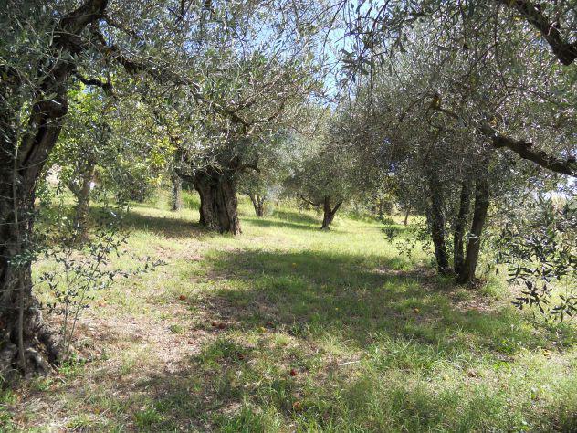 Terreno agricolo recintato con uliveto e castagneto