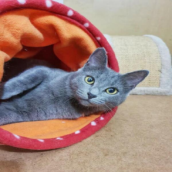 La gattina di velluto vi aspetta
