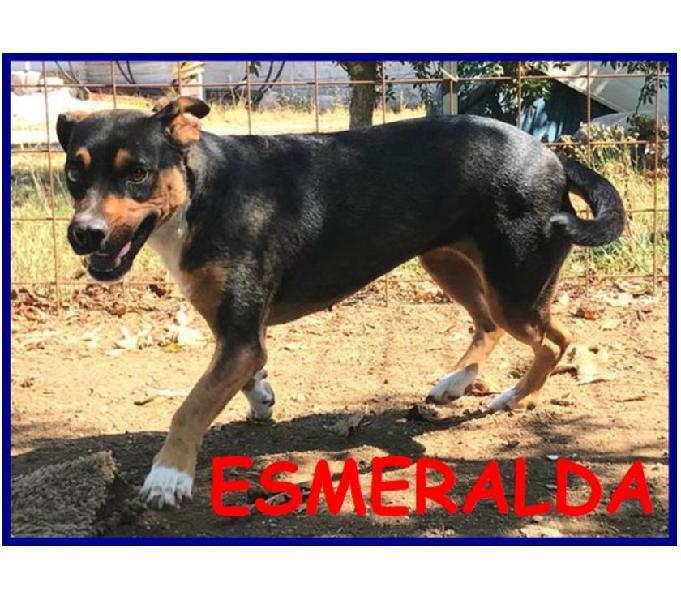 Esmeralda 3-4anni dolce affettuosa bisognosa di coccole