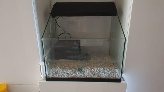 Tartarughiera-acquario