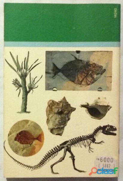 Il mondo dei fossili di De Zanche   Mietto 1°Ed.Arnoldo Mondadori, ottobre 1977 perfetto 2